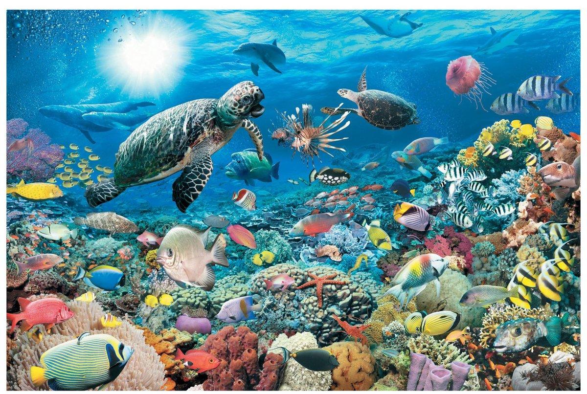 Дню, подводные картинки океана для детей