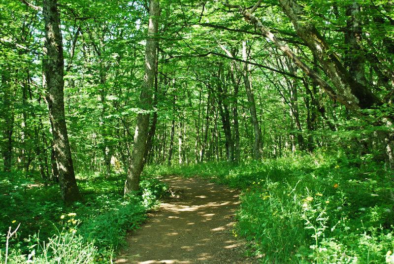 лес лиственный фото