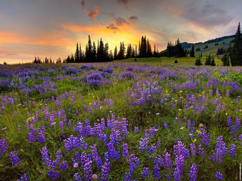 Красивые весенние пейзажи