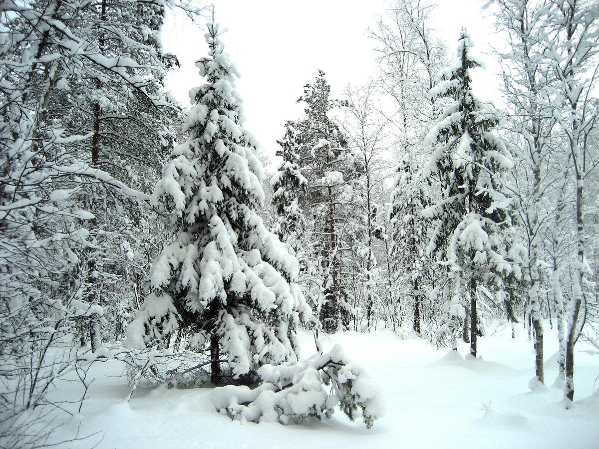Картинки леса зимой для детей, своими