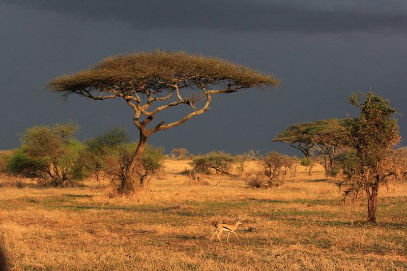 Фото марины африкантовой и черкасова вплетения трёх-четырёх