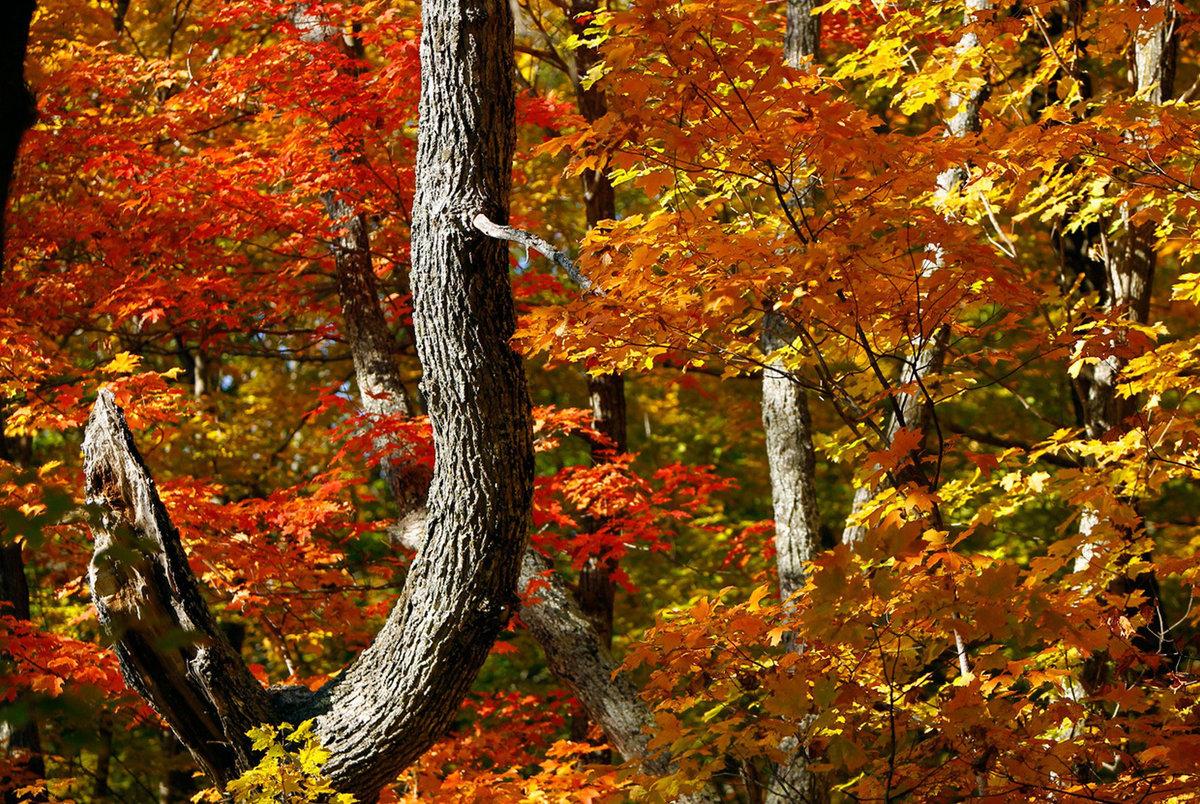 Картинки золото осени, открытка день