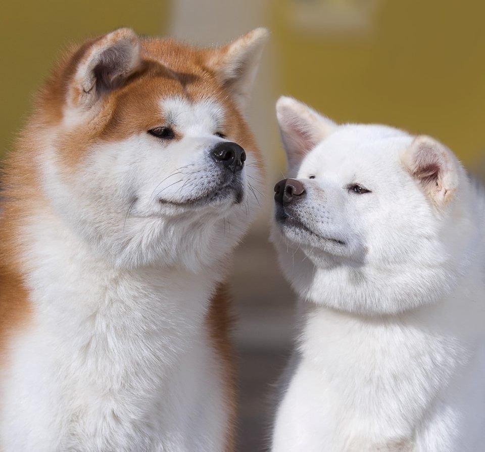Когда вы выÑодите гулять с собакой – вы не выгуливаете ее, вы совершаете совместную прогулку с лучшим другом!