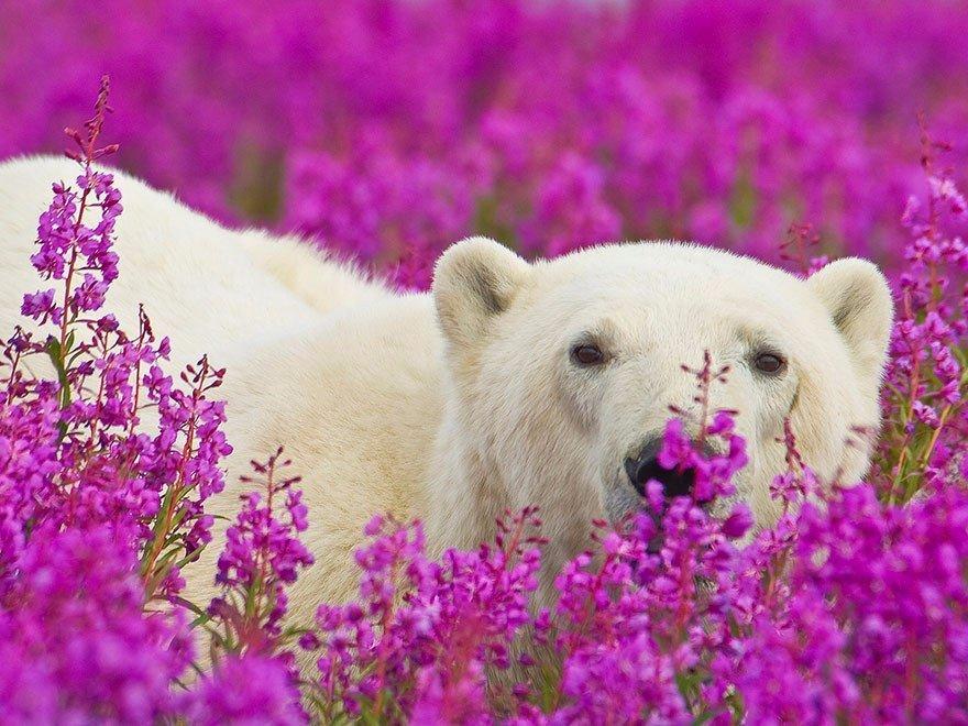 Картинки природа животные цветы, днем