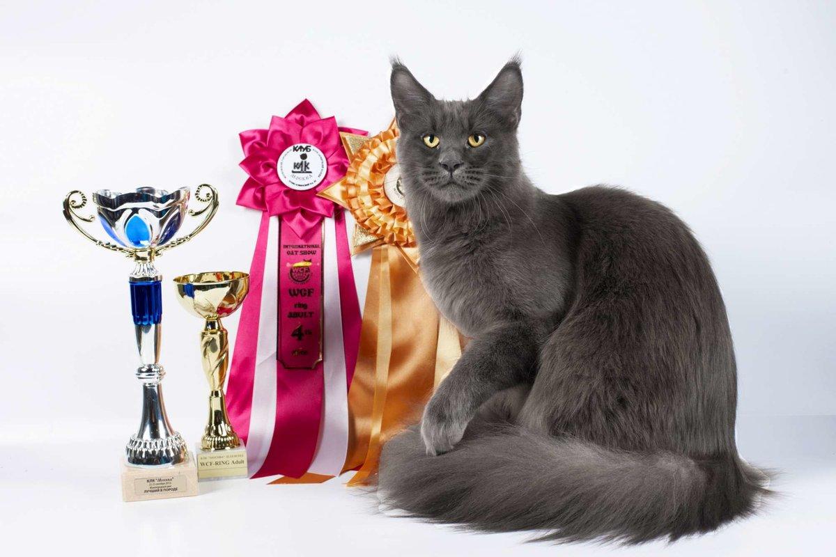 Картинки любителей кошек