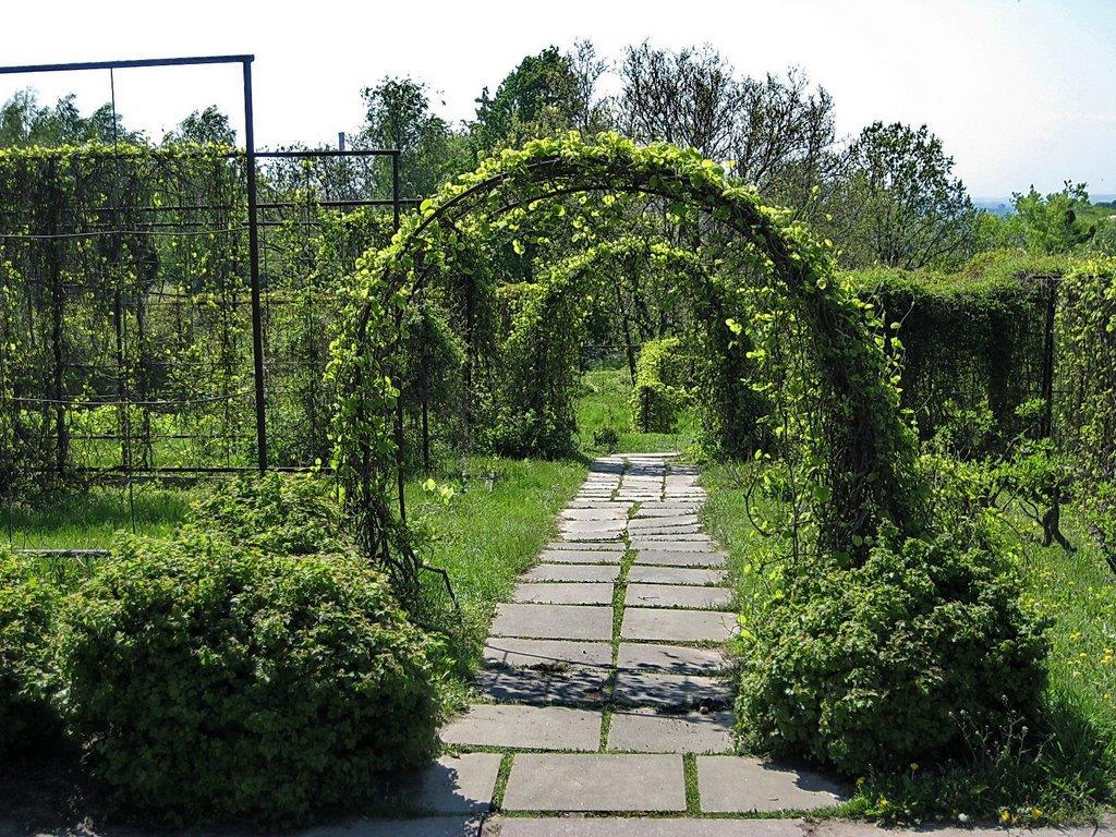 новогодняя фоминский ботанический сад фото в киеве насытят вашего мужчину