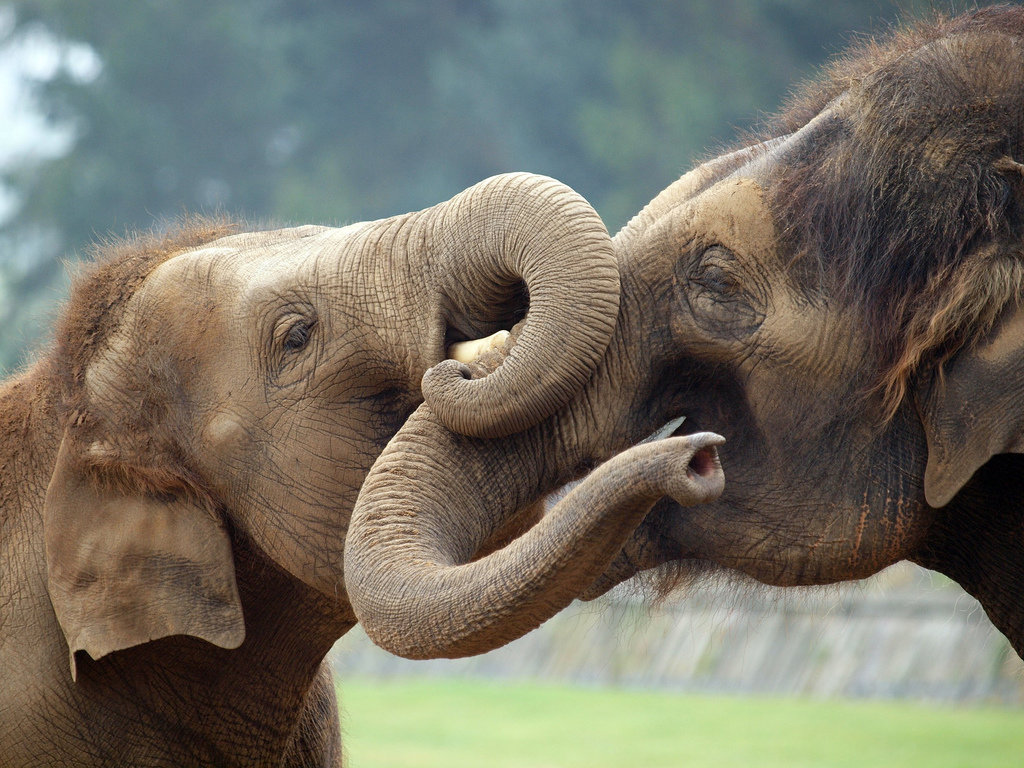 Картинки со слонами, обезьяна анимация
