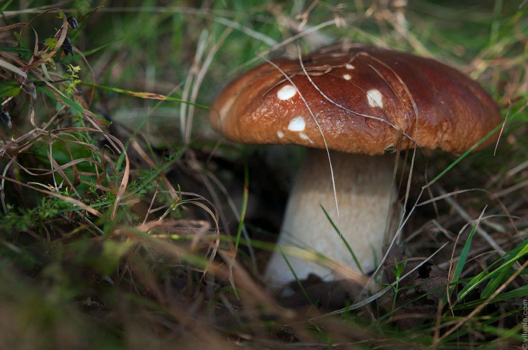 разделе все грибы россии фото будешь