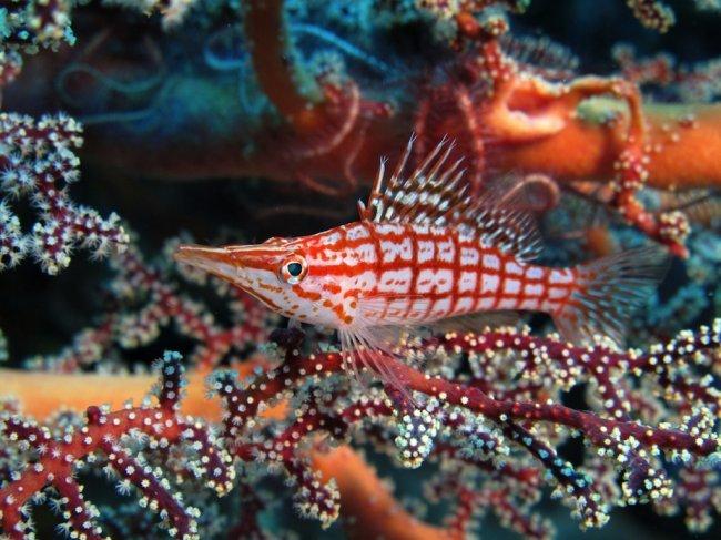 10 лучших мест для подводной макросъёмки. [подводная макросъемка, путешествие, красивые места]