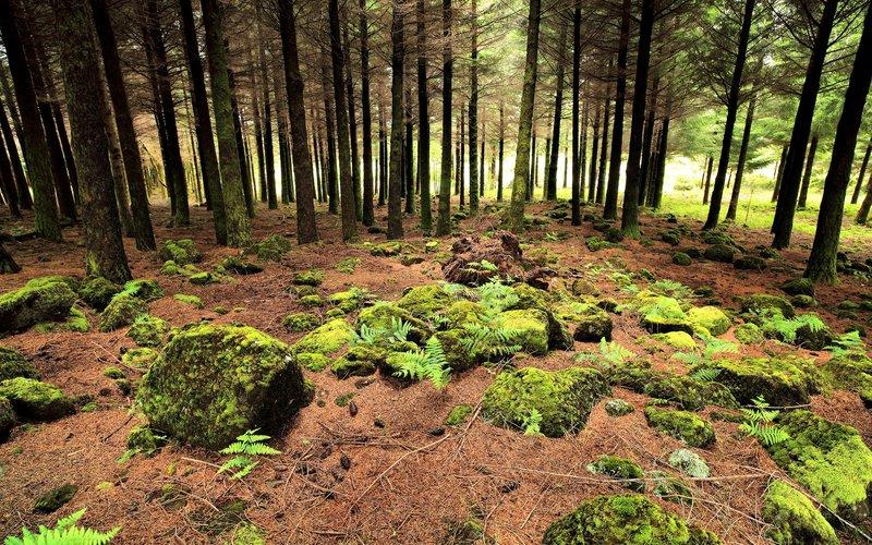 2560x1600 Обои папоротник, лес, деревья, хвойные, шишки, земля, камни, мох