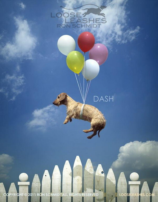 Фотографии собак от Ron Schmidt. | Яркое искусство