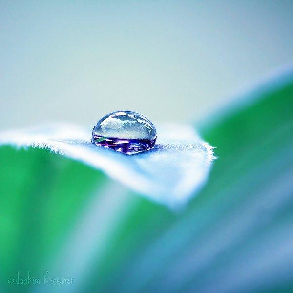 Капля воды на листке