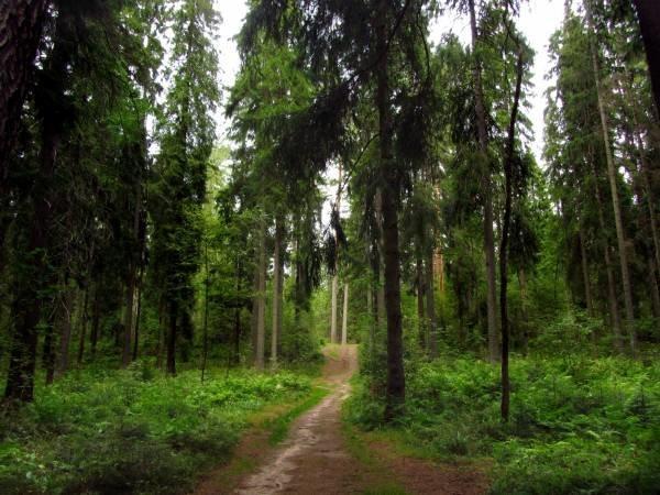 Хвойный лес фото - Красивые фото леса - Лес - Фото - Фото природы, красивые картинки, обои