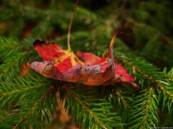Хвойный лес фото - Лес картинки - Фото мир природы
