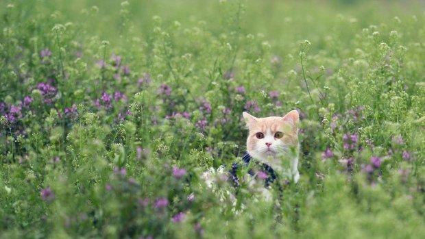 Кот прячется среди цветов