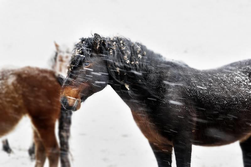 Лошади - Дневник - Алтай Фото