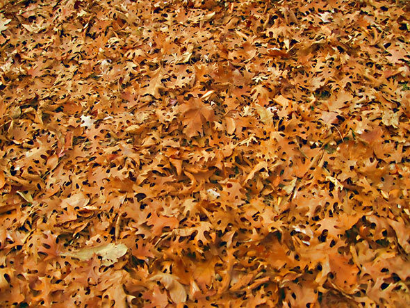 Осенние текстуры и паттерны | Photoshop For All
