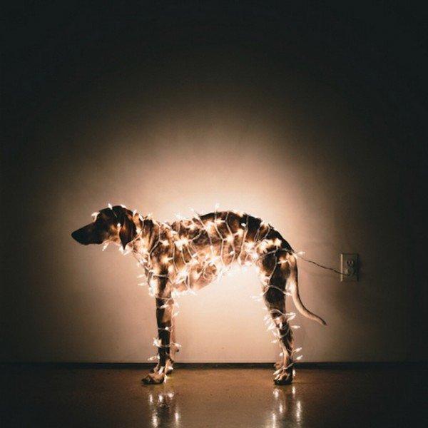 Самая флегматичная собака в мире (фото) | STENA.ee