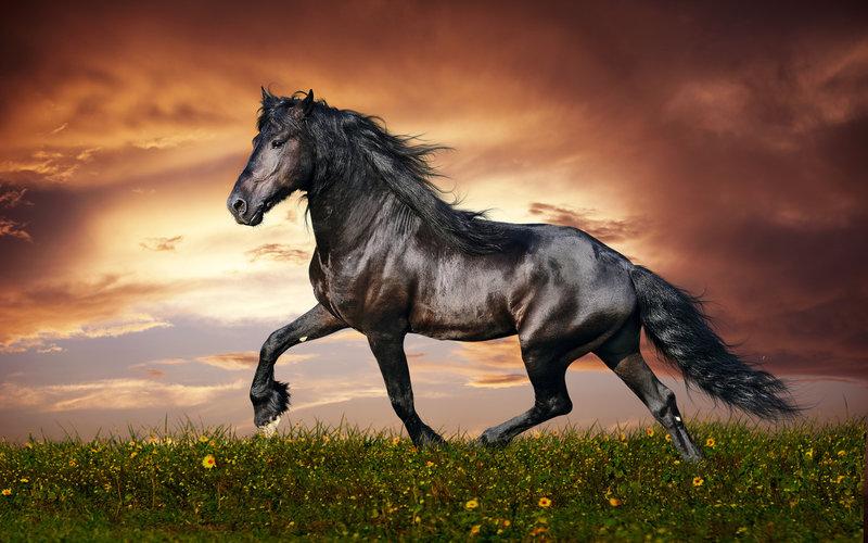 Самые красивые породы лошадей (15 фото) - 25 Февраля 2015 - Журнал МиллиардерЪ | Блоги