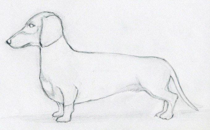 Такса. Уроки пошагового рисования для детей