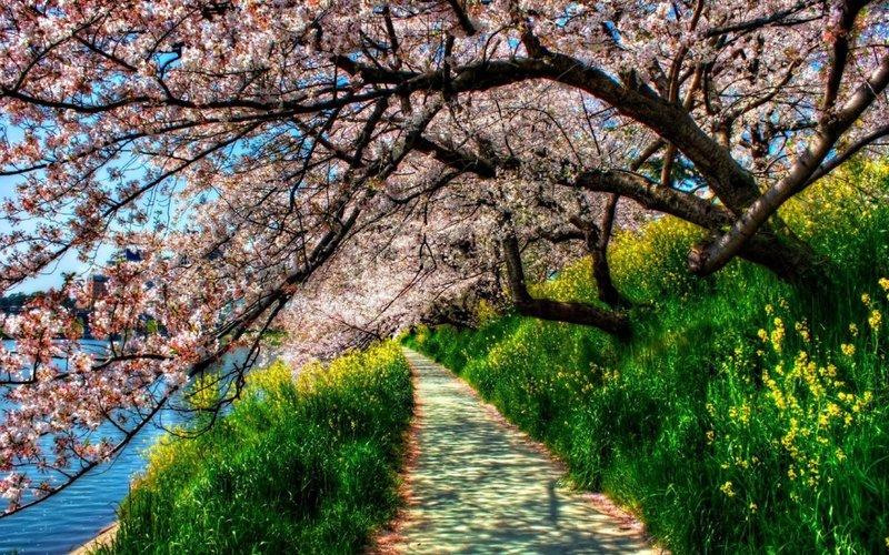 Весна. Природа  - Фотоальбомы - Фото