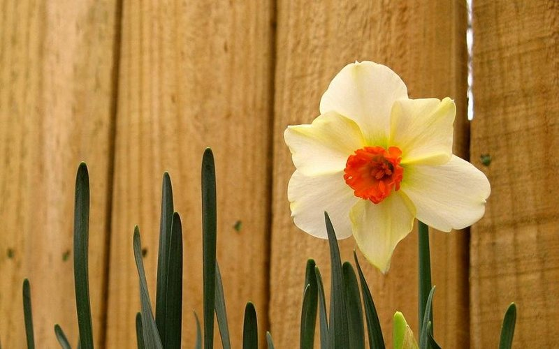 Весна пришла! (красивые весенние фото) / природа / Романтика - мир любви и романтики (картинки про любовь, рецепты и кулинария, красивые фото)