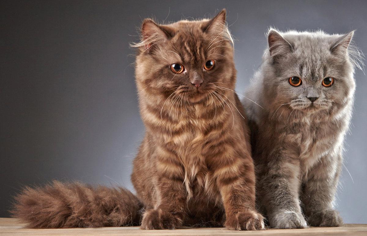 В принципе это обычные весёлые и активные котята