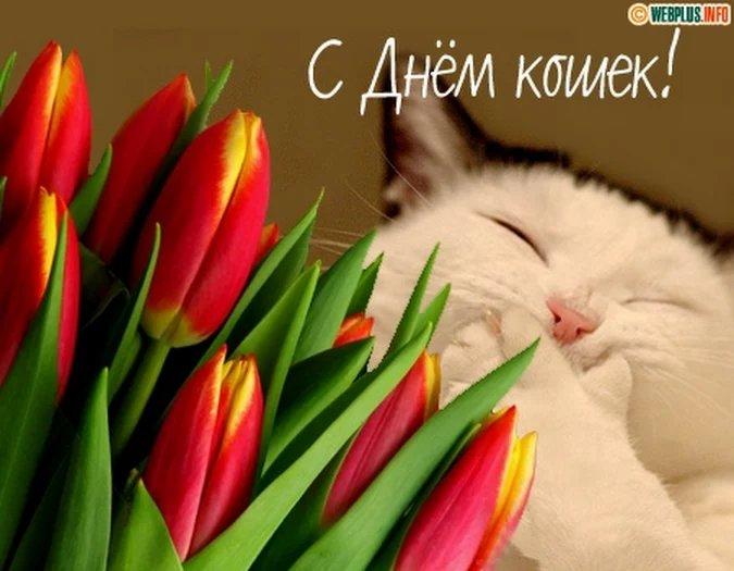 Юбилеем, открытки к дню кошек