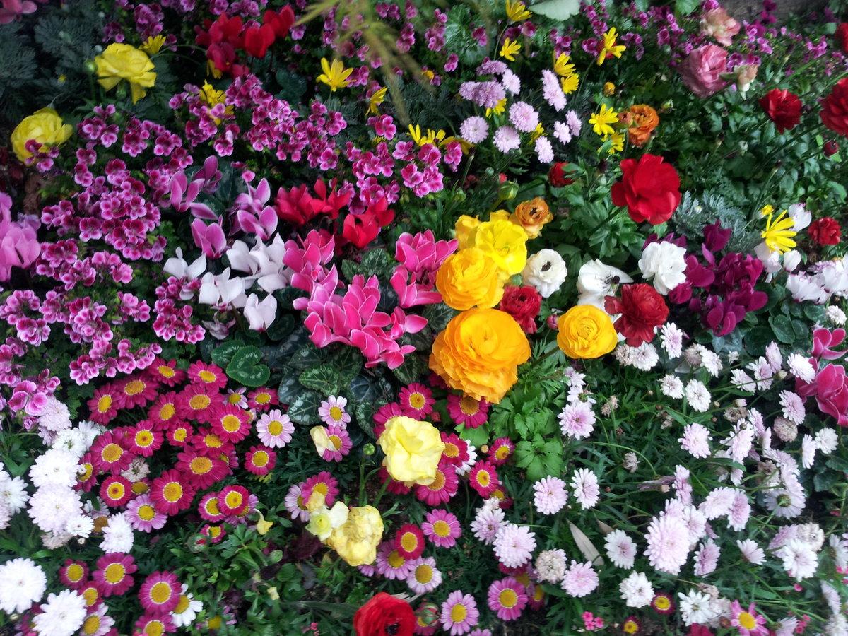 Картинки с цветами на клумбе