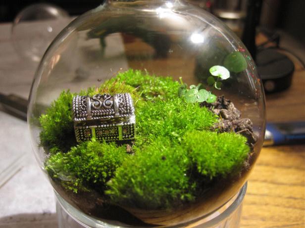 что можно выращивать в стеклянных банках