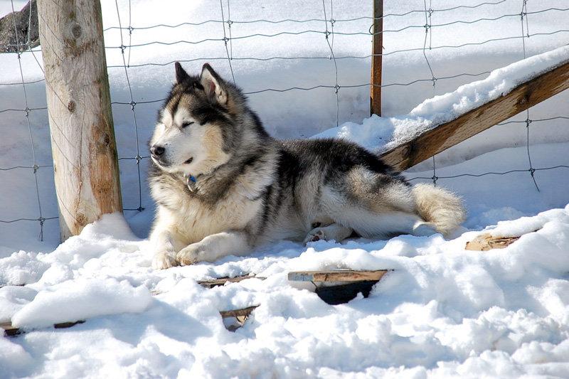 О собаке - 2