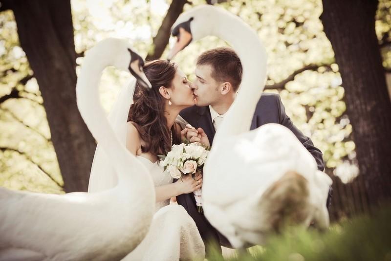 Навроцкий Сергей - свадебный фотограф в Киеве в городе Киев — ProWedding
