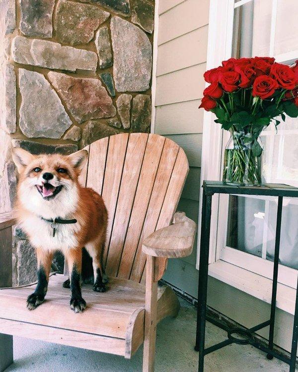 Мадам,эти цветы прекрасны!