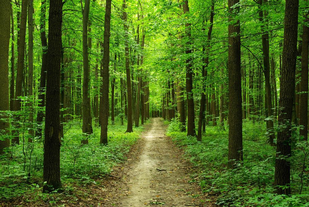 Лесные картинки