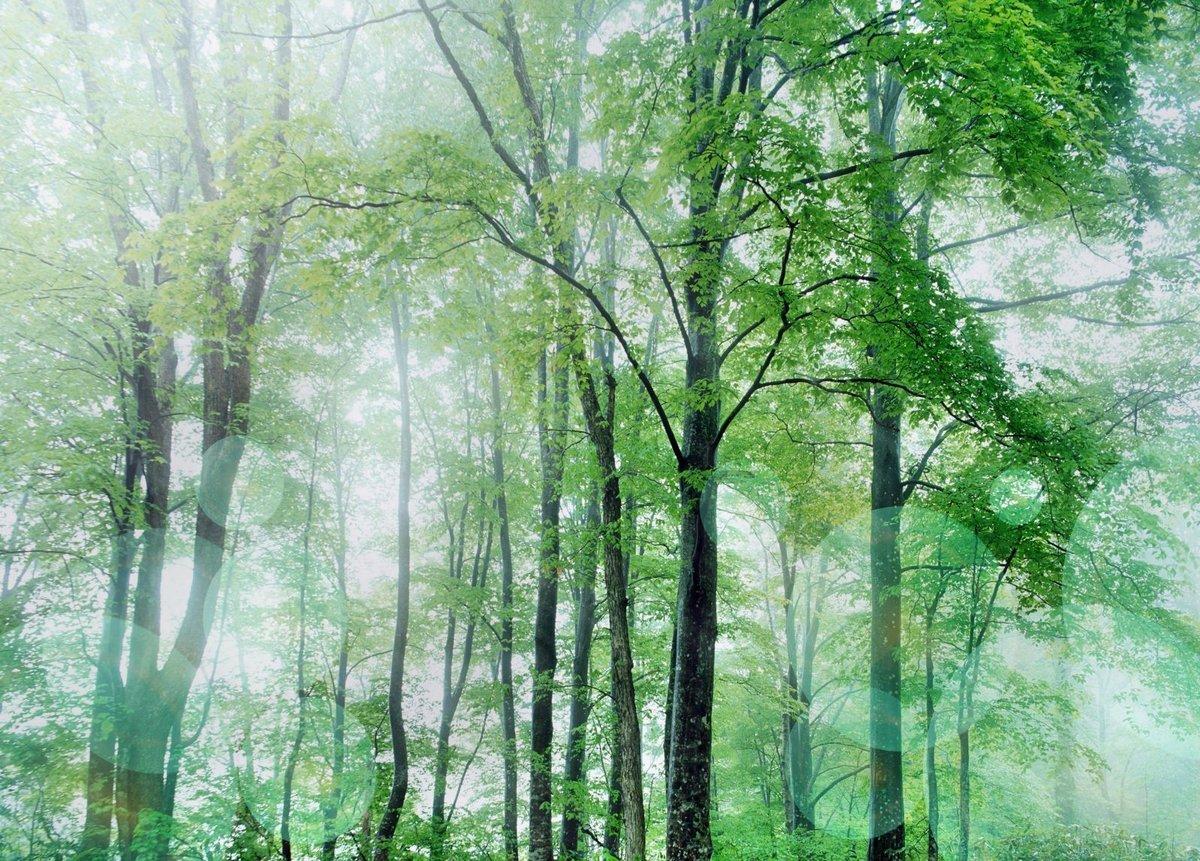 Прикольный, фон леса для поздравления
