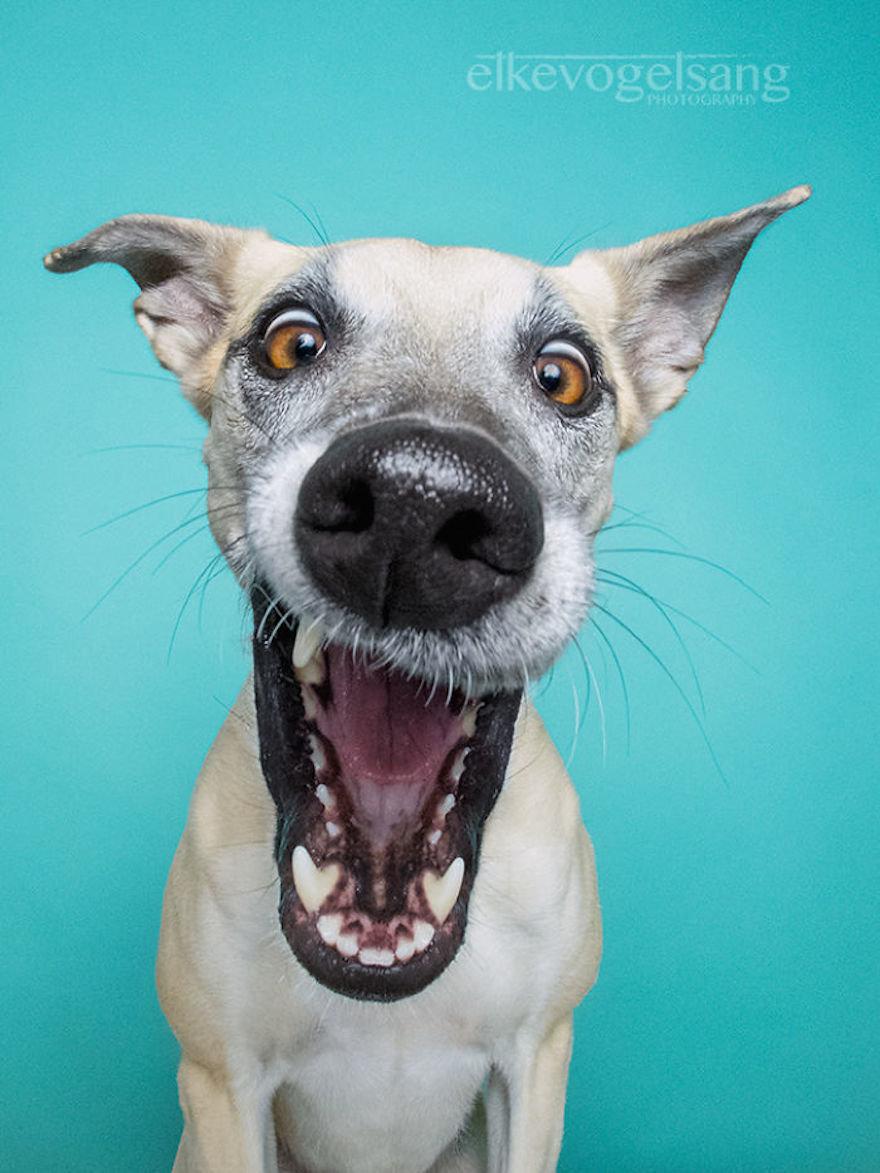Смешные собаки картинка