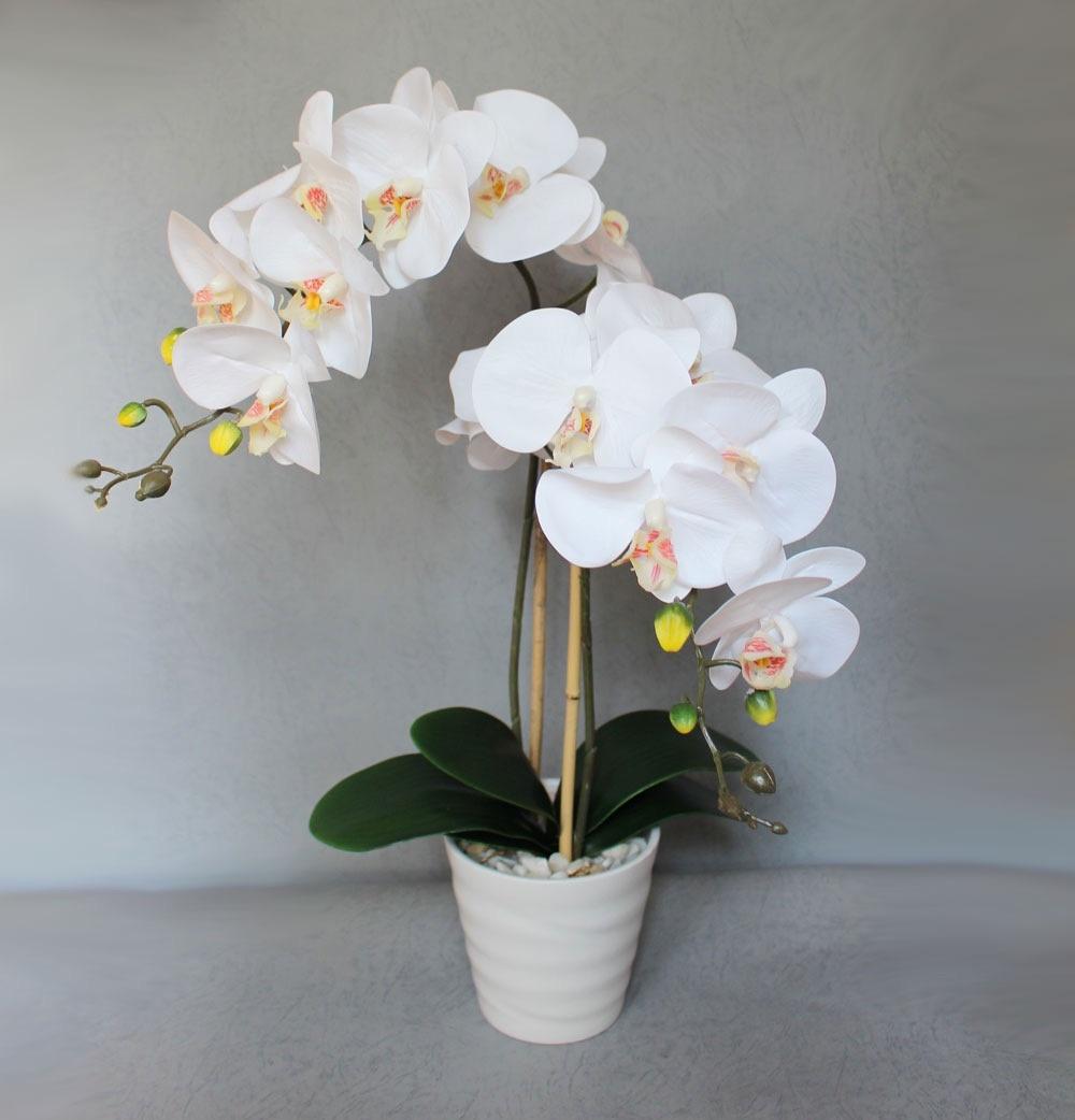 Букет, цветы орхидея купить цена