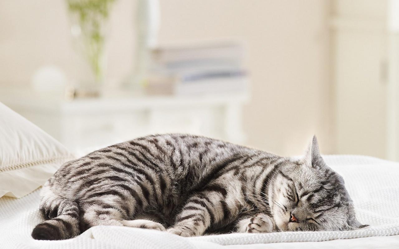 Картинки Спит Кот