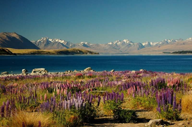 огромное множество фоторепортаж из новой зеландии сад