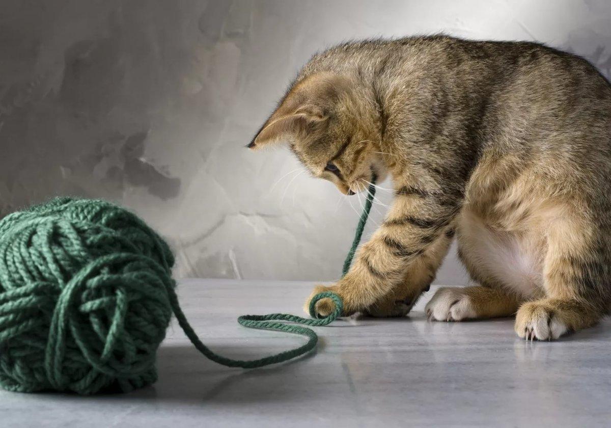 Красивые и смешные картинки про кошек