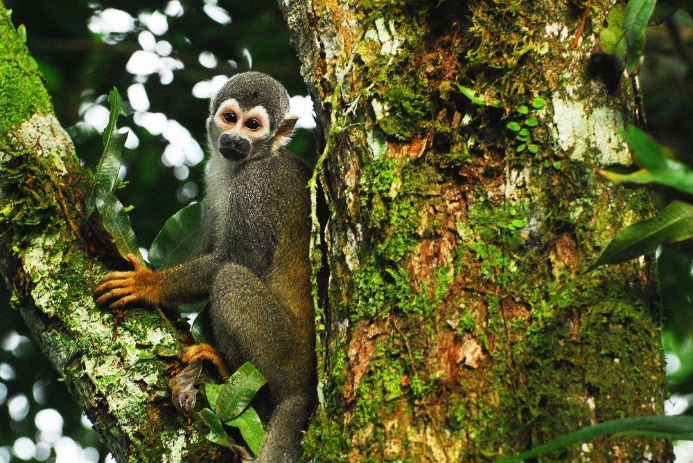 фото животных южной америки вариант