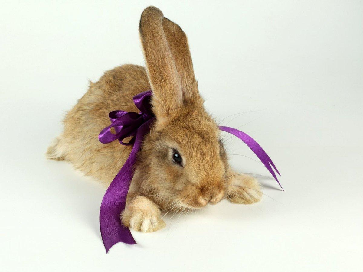 Надписями очаровательная, открытка белый кролик