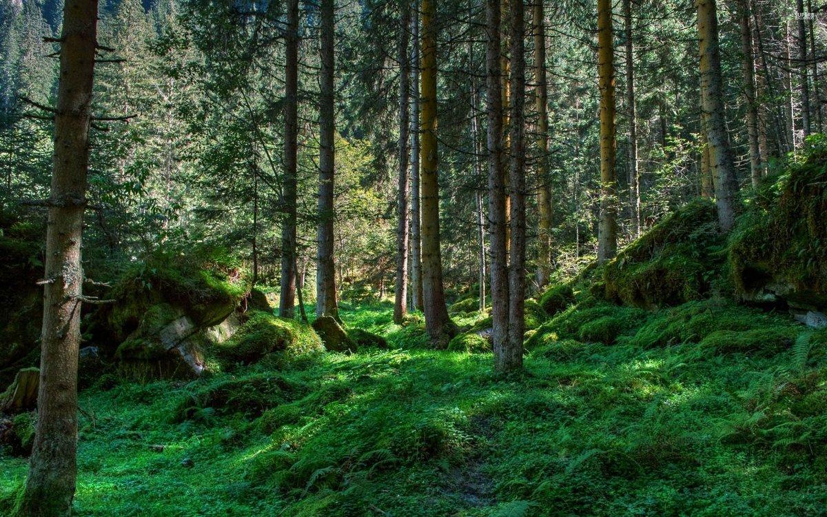 Картинки о лесе
