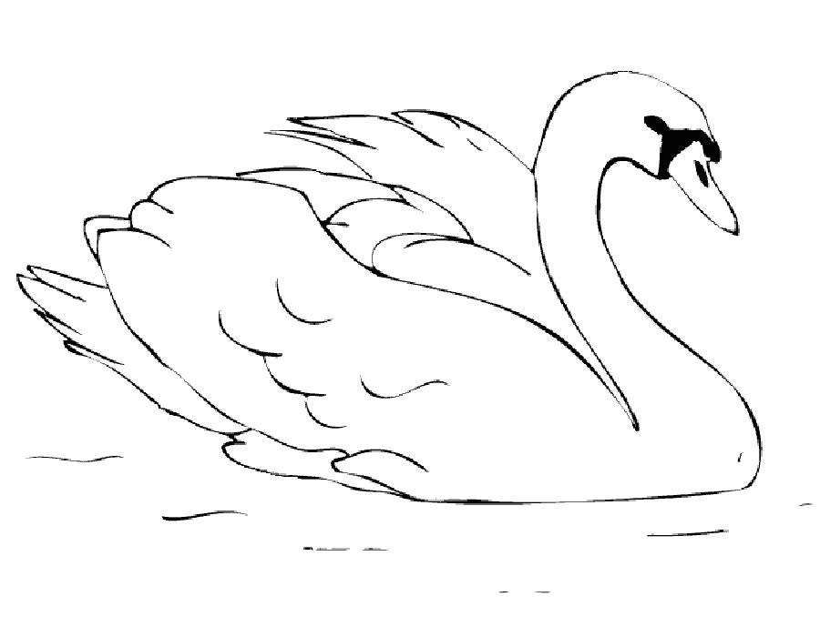 Лебедь картинка трафарет