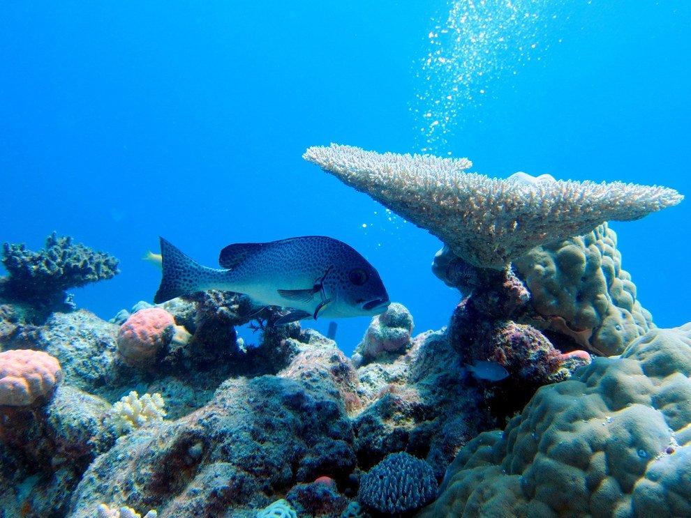 Большие картинки подводный мир своей серии