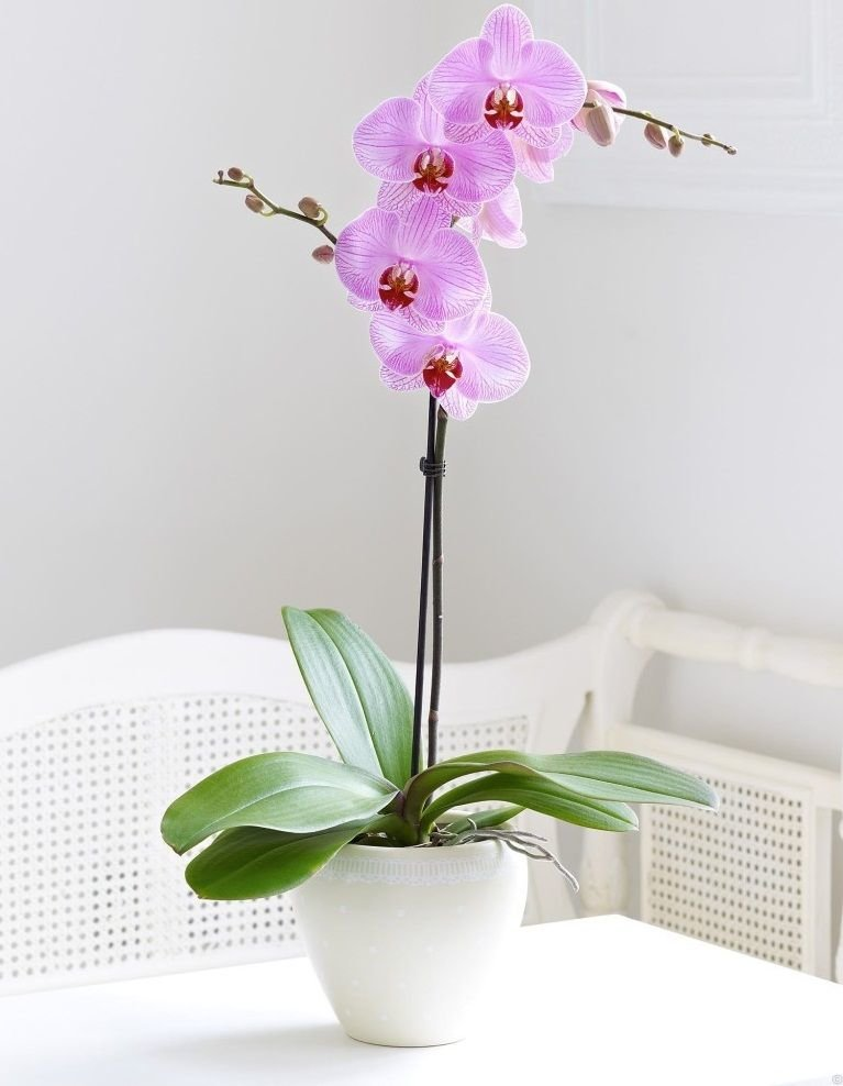 Заказ орхидеи через интернет магазин