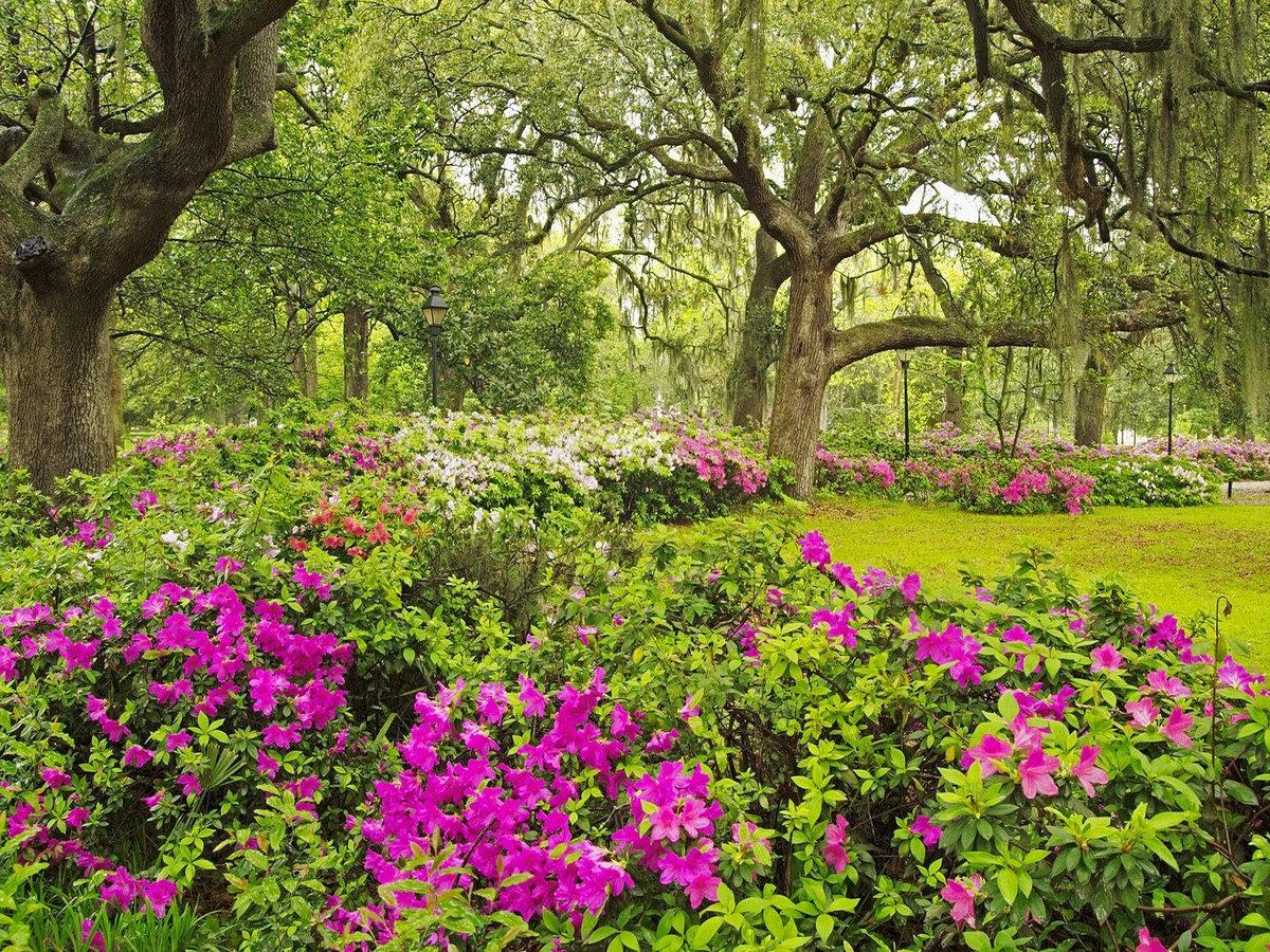 Наруто надписями, картинки сада с цветами и деревьями