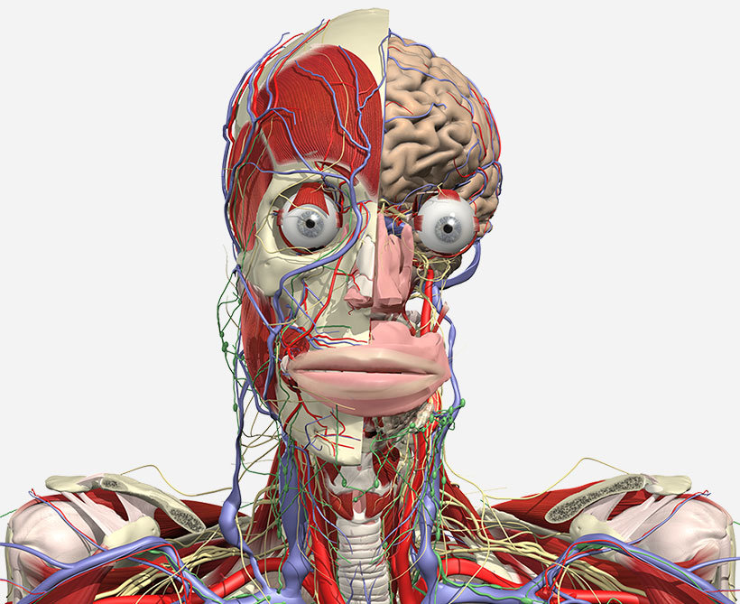 Subscribe to the ultimate online 3D human anatomy educational ...
