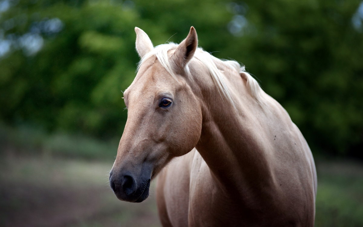 В картинках лошадей, день рождения