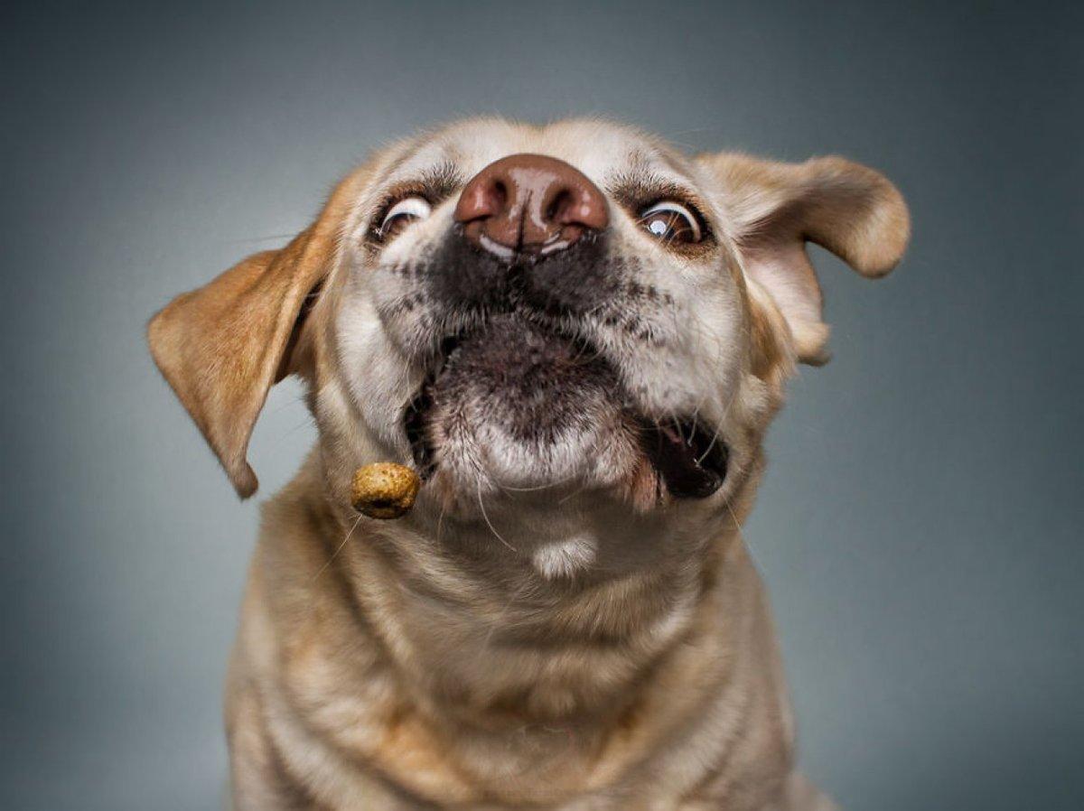 Смешные собаки только картинки